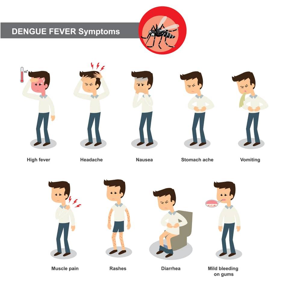 welche krankheiten k nnen von moskitos bertragen werden. Black Bedroom Furniture Sets. Home Design Ideas